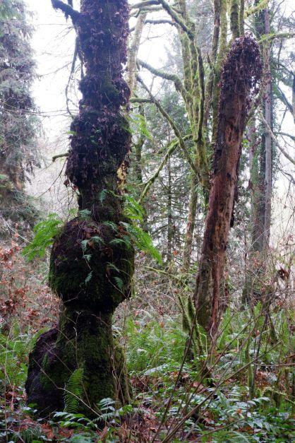 Des arbres aux drôles de formes.