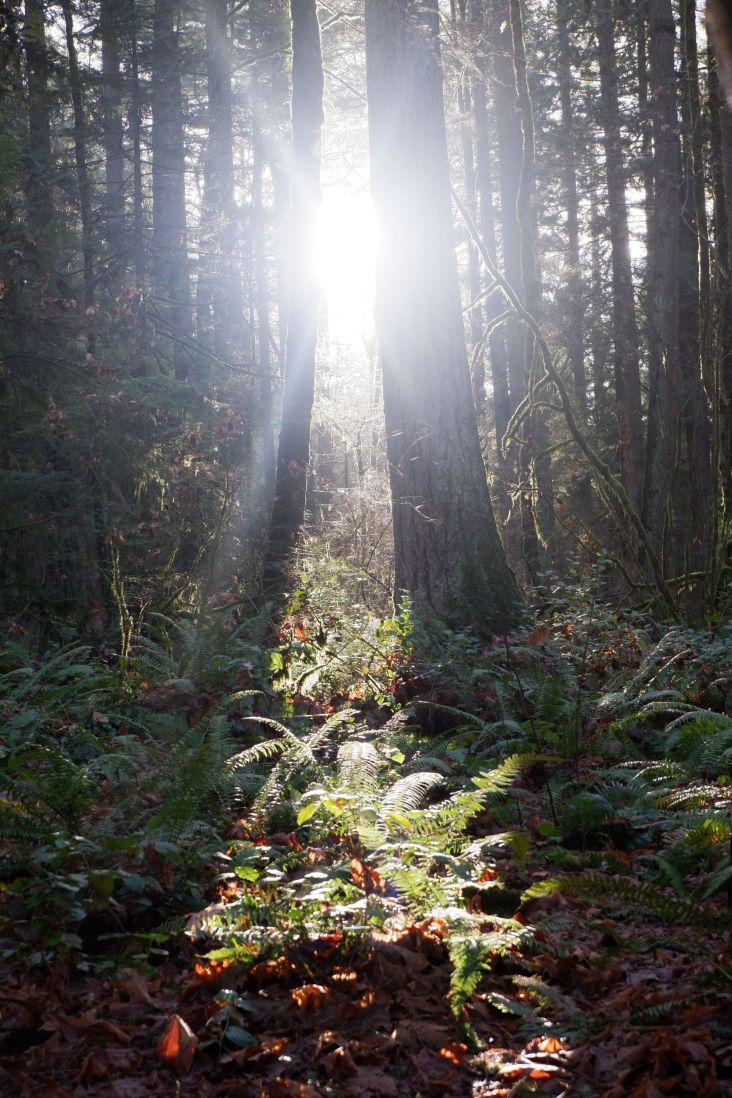 Suivre la lumière (3)