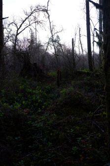 La forêt à la tombée du jour