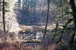 Un étang, probablement enchanté, comme les Mima Mounds
