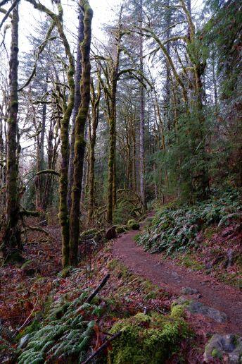 Le sentier s'engouffrant dans la forêt