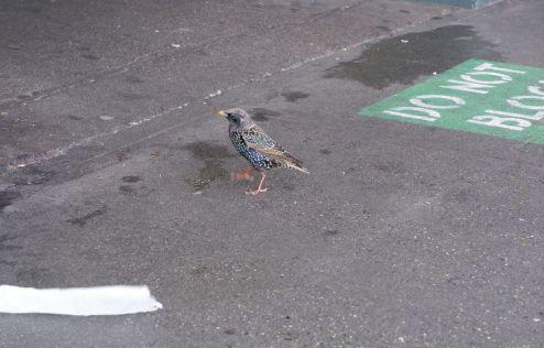 Un bel oiseau, espèce inconnue.