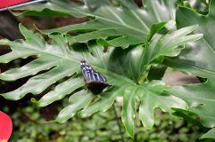 Dans la serre aux papillons (3)