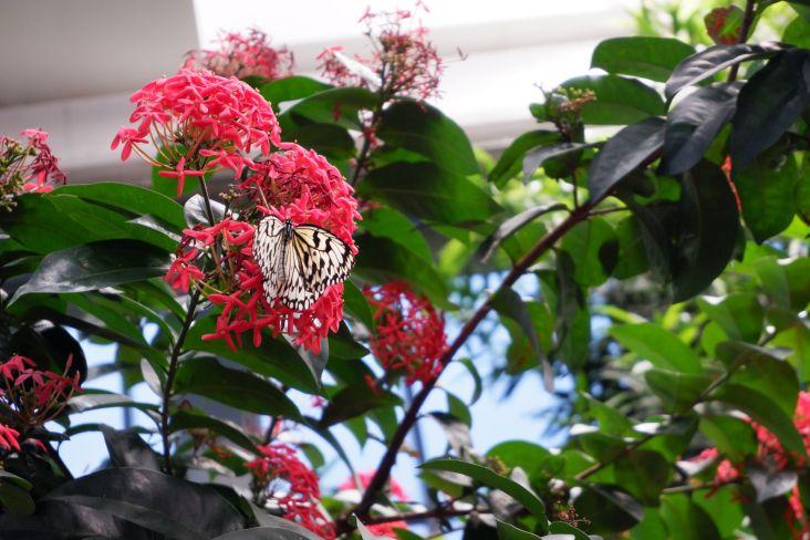 Dans la serre aux papillons (4)