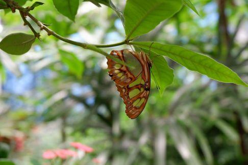 Dans la serre aux papillons (1)