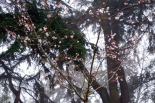 Premières fleurs au milieu de la brume