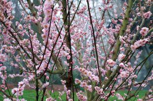 Le printemps semble déjà bien installé