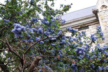 Le printemps à Londres : touches bleutées incroyables.