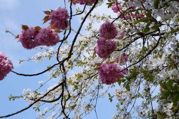 Le printemps à Londres : je passerai mon séjour à chasser les couleurs vibrantes et chatoyantes de la ville.