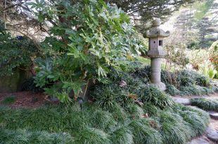 La végétation des jardins japonais a toujours été ma préférée : je ne sais pas quelle est cette plante, mais j'aimerais beaucoup en avoir une chez moi.