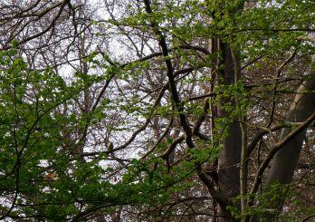 Un autre oiseau vert mystérieux. Voire même encore un autre.
