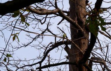 Un oiseau vert mystérieux.