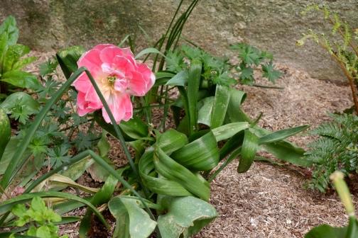 La végétation au pied de l'église a des airs d'ikebana, ce qui est ironique étant donné que l'ikebana est un art imitant la nature.