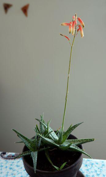 L'antenne fleurie