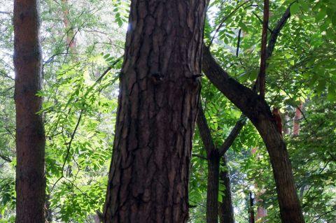 Un écureuil bien caché (1)