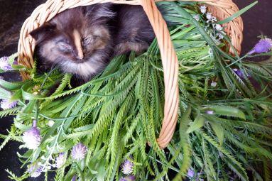 Un tout petit chaton dans un panier.