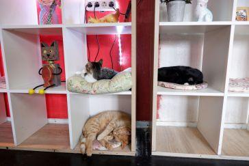 Recyclage d'étagères en lits superposés pour chats.