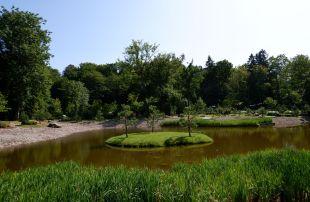 Un petit îlot avec trois arbres au milieu de l'eau.