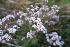 Petites fleurs sauvages.