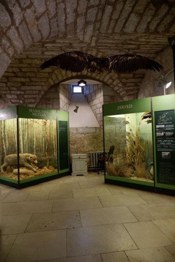 Un musée d'histoire naturelle dans l'enceinte du château.