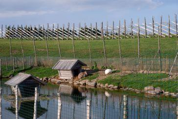 Les lapins, les tortues et les biquettes cohabitent au milieu du champ de moulins.