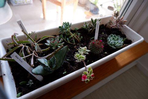 Ma petite collection botanique