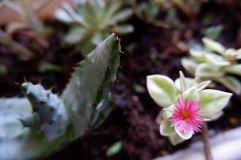 Petites fleurs de la fin de l'été (1)