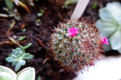 Petites fleurs de la fin de l'été (2)