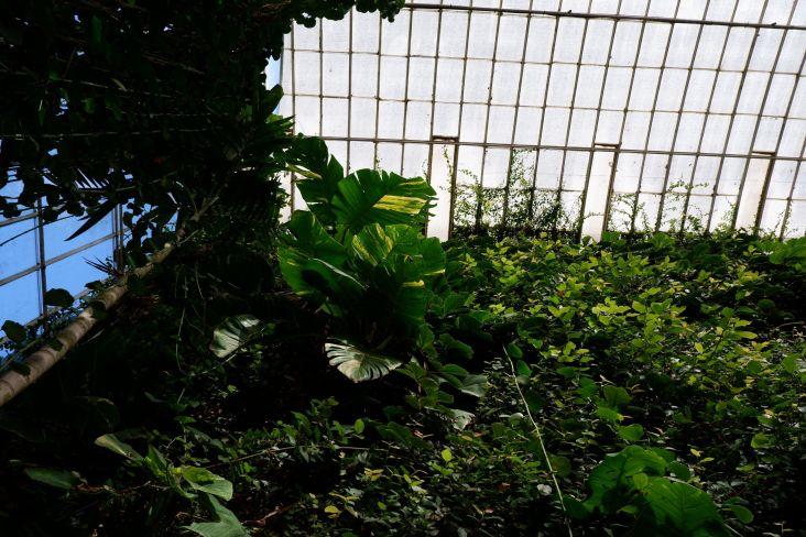 Une demi-serre ? Avec un superbe mur végétalisé. Une jungle verticale.