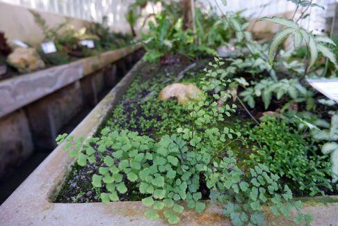 Une impression de forêt miniature, comme les jardins ombragés japonais.