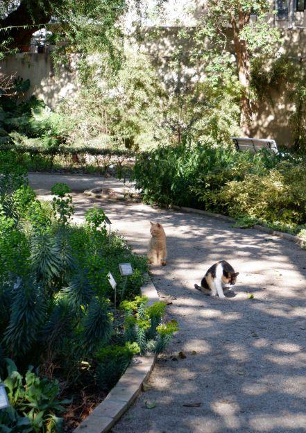 Les habitants du jardin botanique (1)