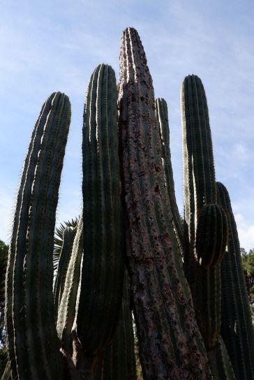 J'ai mis du temps à apprécier les cactus. Puis, je suis allée en Californie, depuis, je les associe à un joli chapitre de ma vie.