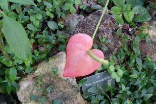 Un joli coeur