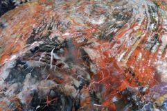 Peinture ou tronc fossile silicifié ? (1)