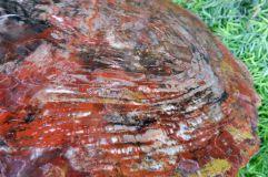 Peinture ou tronc fossile silicifié ? (2)