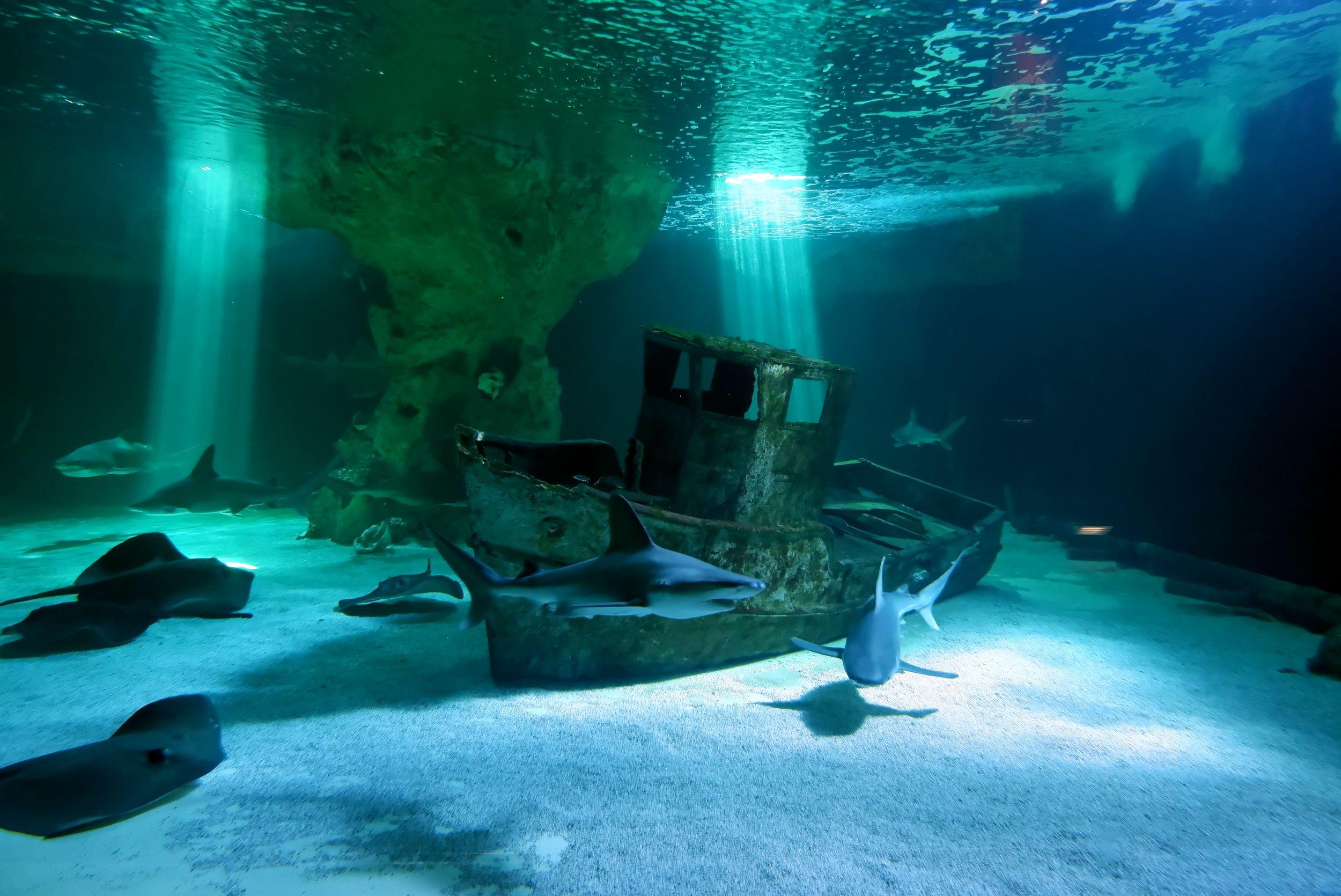 aquarium requins