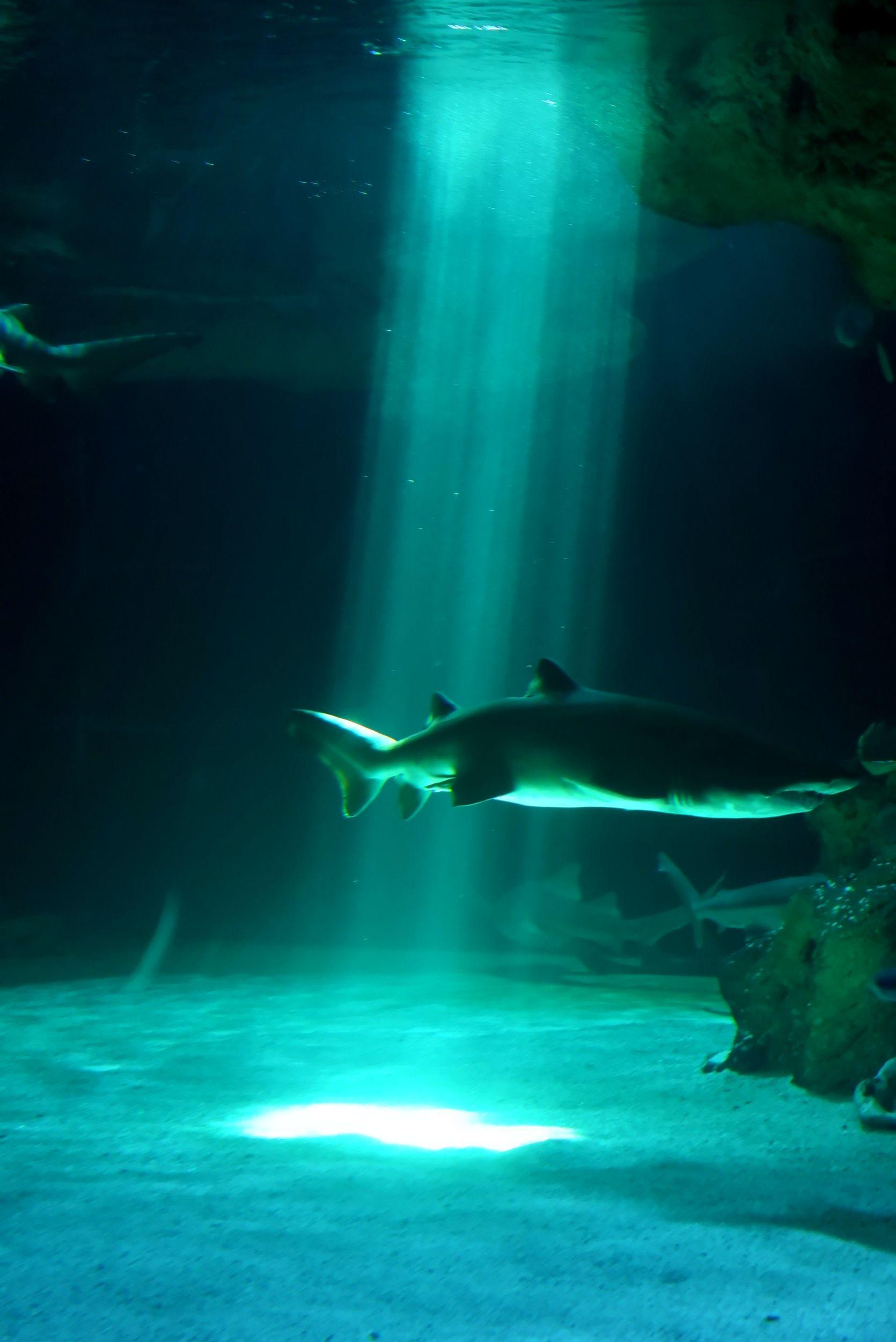 lumière requins
