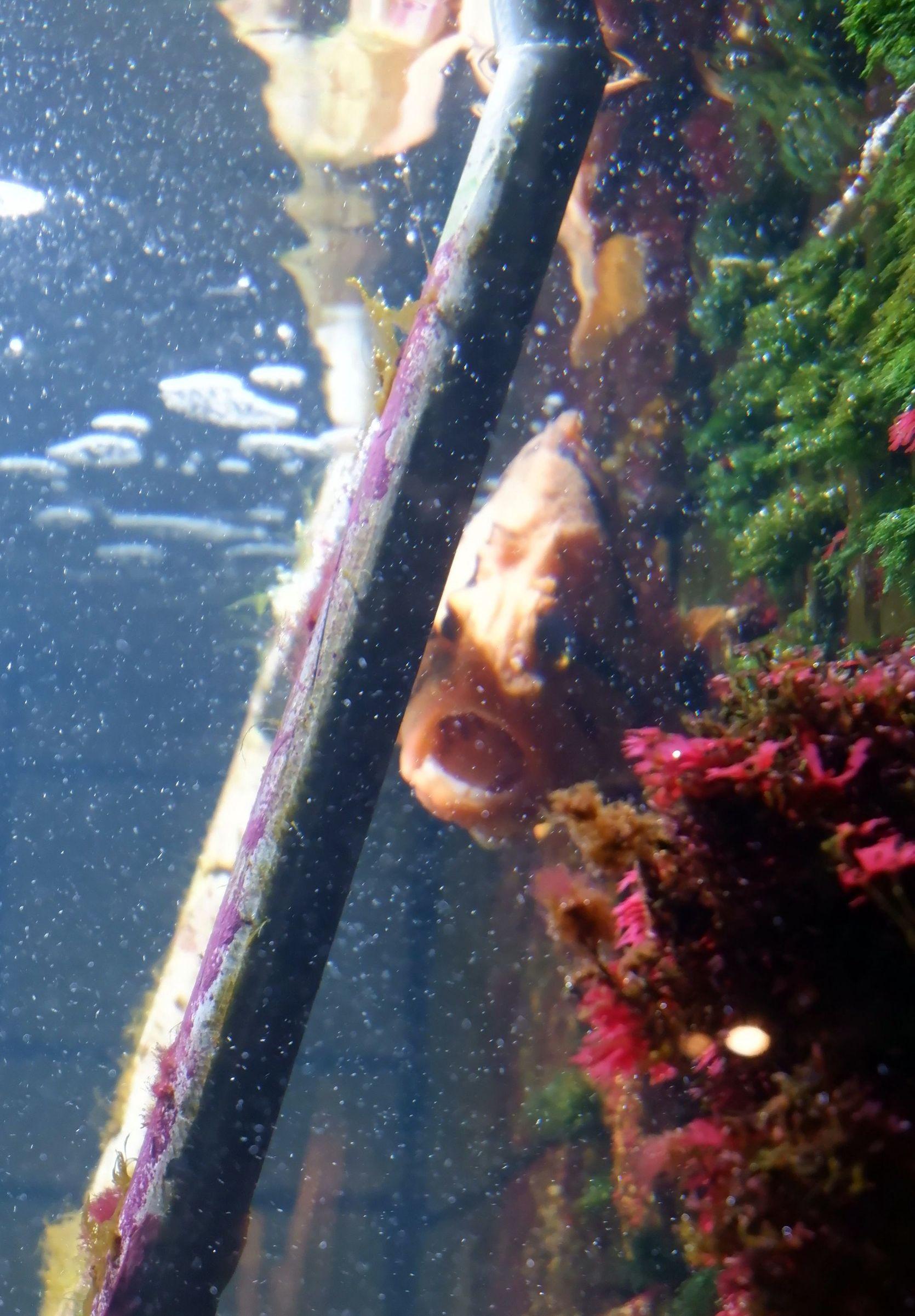 poisson à la gueule ouverte