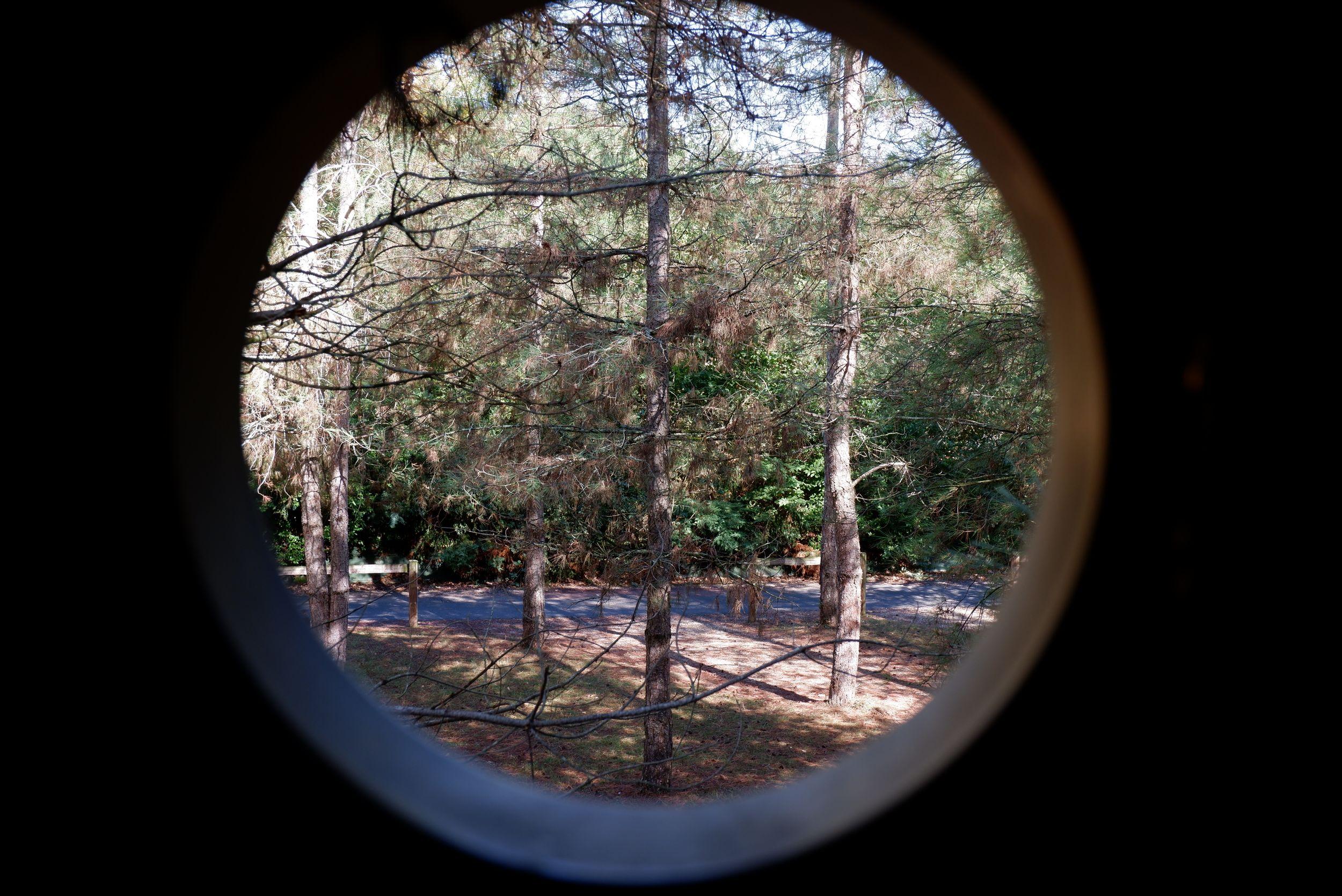 fenêtre ronde dans la forêt