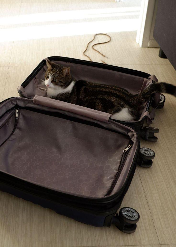 stormy dans une valise