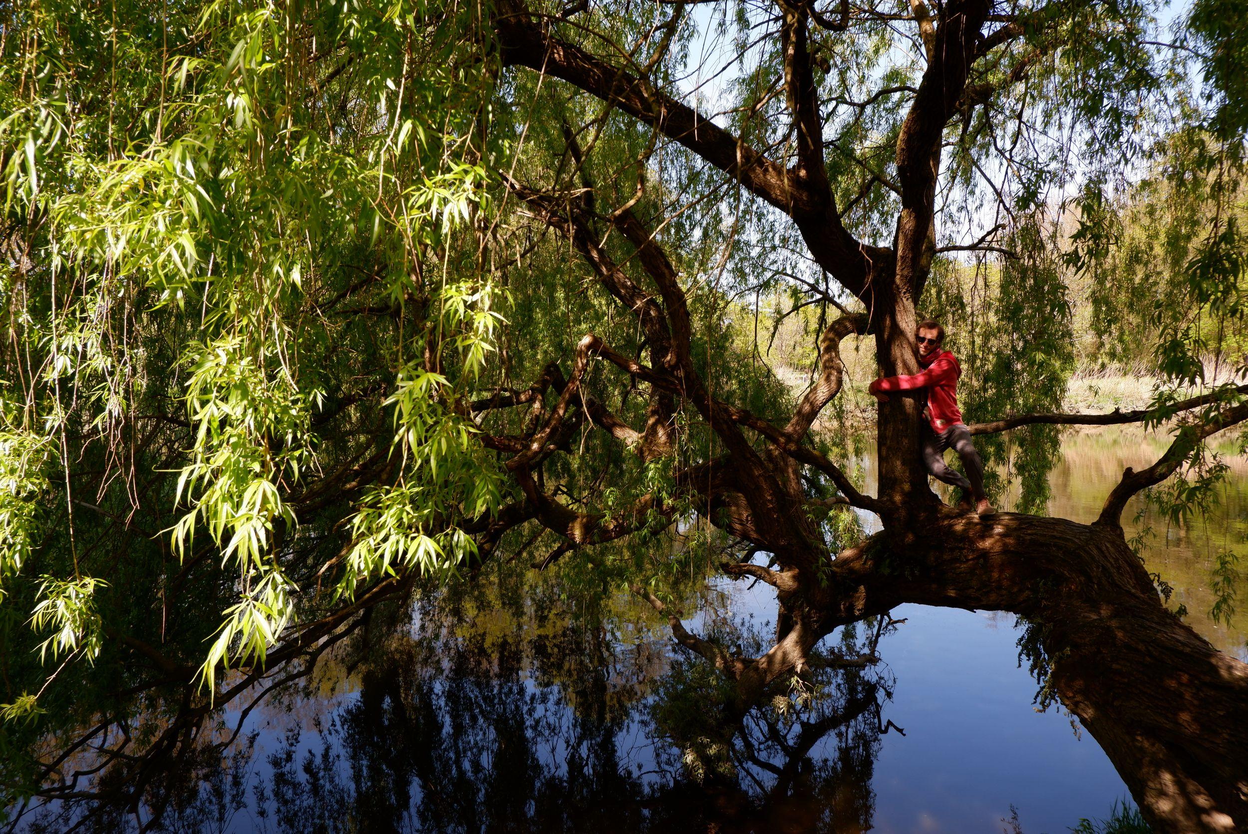 Ryan perché sur un arbre