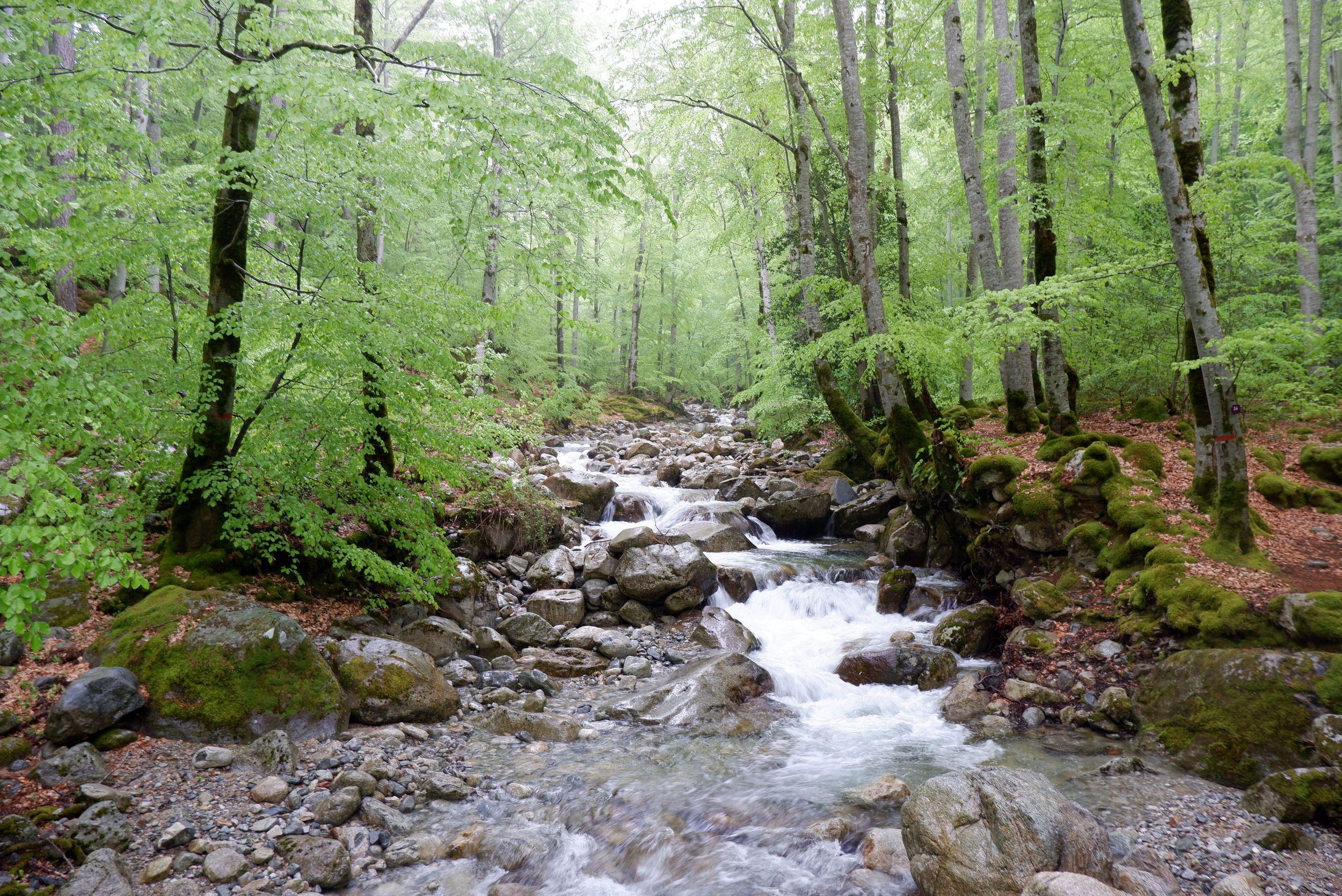 Un ruisseau dans la forêt