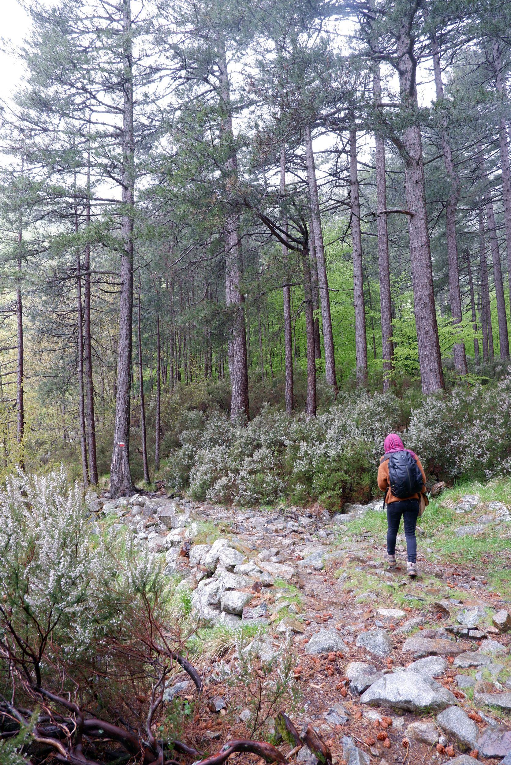 Justine sur le sentier forestier