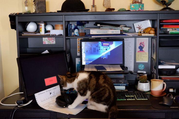 Stormy sur mon bureau devant mon ordinateur.